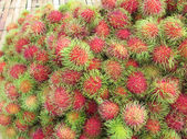 Sweet fruits rambutan — Stock Photo