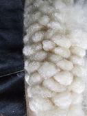 Cotton  — Stok fotoğraf