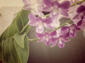 Orchideebloemen — Stockfoto
