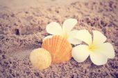 Shells on beach — Stock Photo