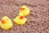 żółtą gumową kaczkę — Zdjęcie stockowe