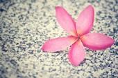 Pink frangipani flower on the beach — Stock Photo