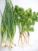 Coriander and spring onions — Stock Photo
