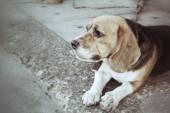 Pies szuka — Zdjęcie stockowe