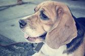 Hond op zoek — Stockfoto