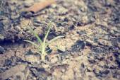 Plants on soil — Stock Photo