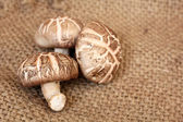 Shiitake mushrooms  — Stock Photo