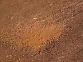 Soil background — Stock Photo