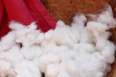 White cotton — Stock Photo