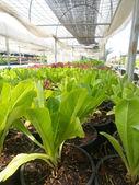 Vegetables garden — Stock Photo
