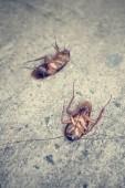 Kakkerlak — Stockfoto