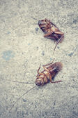 Cockroach — Stock Photo