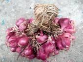 Shallot - asia red onion — Stock Photo