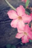 Flores de lirio impala vintage — Foto de Stock