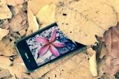 Take photo of pink frangipani flower in autumn — Stock Photo