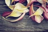 Petals frangipani flower — Stock Photo