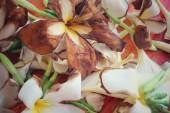 Dry frangipani flowers — Stock Photo