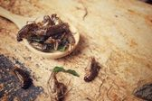 Fried insect — Stock Photo