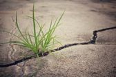 Grass on road cracks — Stock Photo