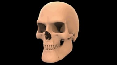 3d rendered rotated skull — Stock Video