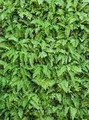Fondo de pared hoja verde — Foto de Stock