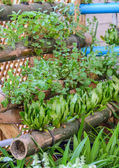 Plant herbs in bamboo stalk — Stock Photo