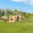 Small huts in rice paddy field, Thailand — Stock Photo #75182293