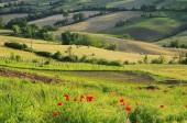 Emilia landscape  — Foto Stock