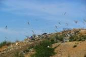 City garbage dump — Stock Photo