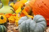 Colored ornamental pumpkin — Stock Photo