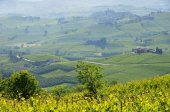 Langhe vineards and villages — Stock Photo