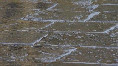 Rain drops falling to cobbles — Stock Video