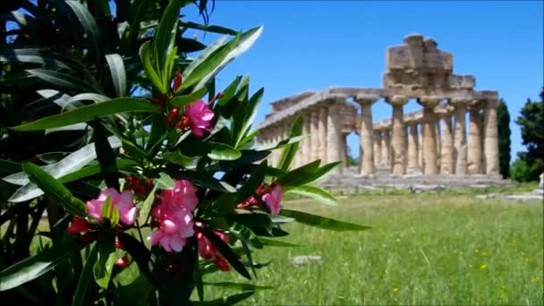 Paestum — Vídeo de stock