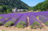 Lavander field in the mountains — Stock Photo