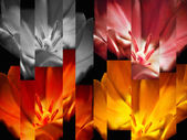 Tulips abstract background — Stock Photo