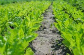 Green salad isolated — Stock fotografie