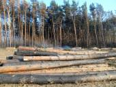 Deforestation affected by fire — Stockfoto