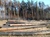 Deforestation affected by fire — Stock fotografie