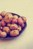 Fresh harvested potatoes — Stock Photo