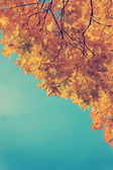 Foliage in the autumn park — Stock Photo