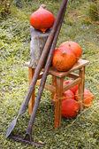 Pumpkins and garden tools on grass — Stock Photo