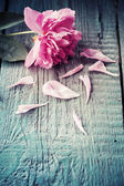 Peonies on wooden background — Stock Photo