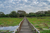 Brazilian Panantal skyline and wooden footbridge — Stock Photo