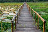 Brazilian Panantal, Victoria Regia plant and wooden footbridge — Stock Photo