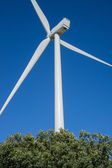 Wind turbines rear view in the countryside, blue sky — Stock Photo