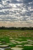 Brazylijski panantal panoramę — Zdjęcie stockowe