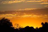 Sunset in pantanal with black skyline and orange sky — Stock fotografie
