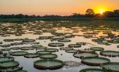 Sunset in pantanal wetlands with pond and victoria regia — Stock fotografie