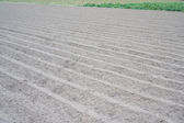 Furrows without plants — Stock Photo