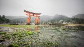 The  famous Floating Torii gate — Stock Photo